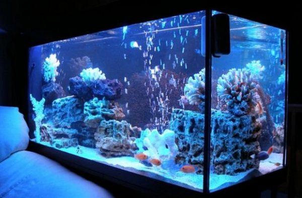 Важная информация, для людей, впервые покупающих аквариум и рыбок