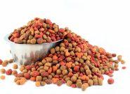 Как выбрать корм для собаки, который не вызывает аллергии?