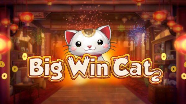 Play'n Go разработали новый игровой симулятор Big Win Cat в клубе Чемпион